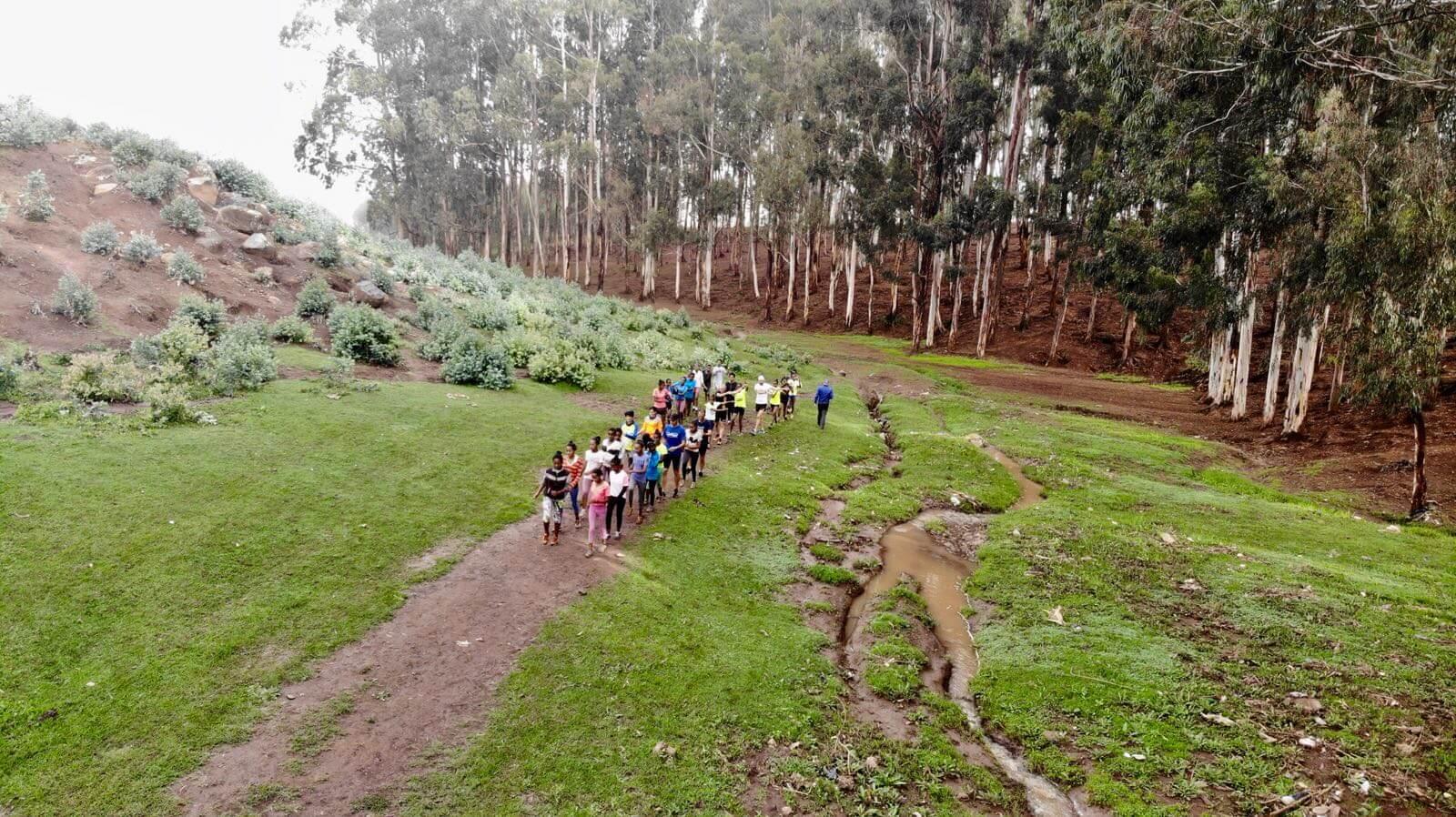 bosque bekoji Etiopia