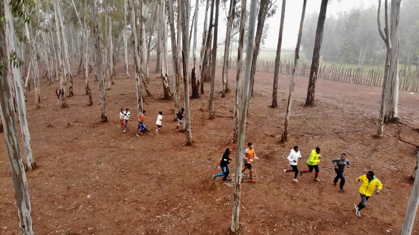 bosque eucaliptus bekoji