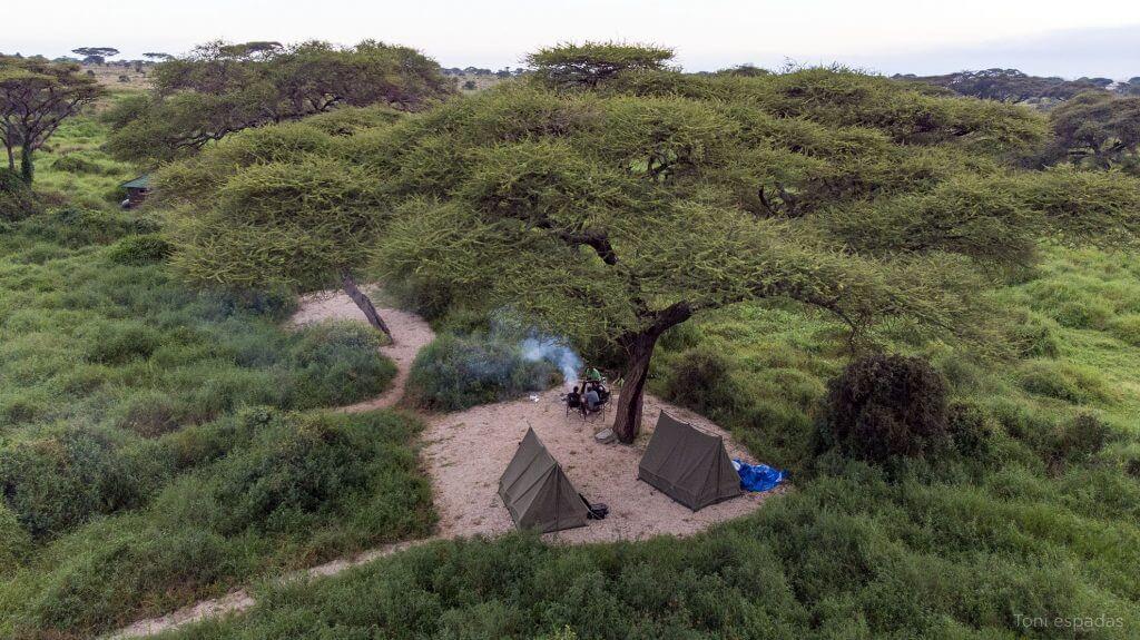 campamento synia
