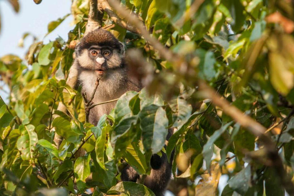 fauna-uganda
