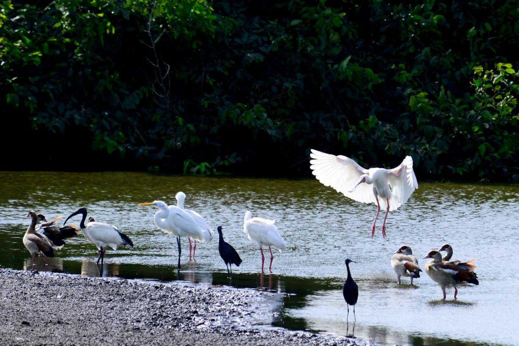 flora-fauna-guinea-bissau
