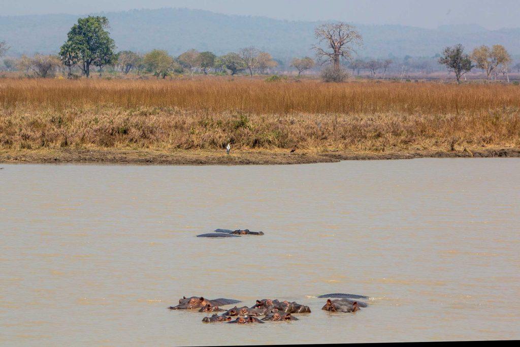 hippo-pool-mikuminp-tanzania