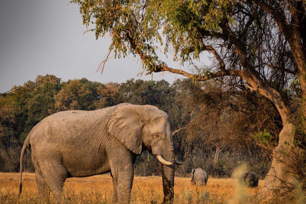 kruger-sudafrica