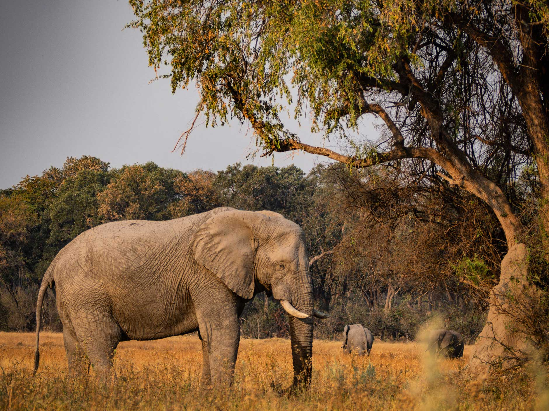Kruger Sudáfrica