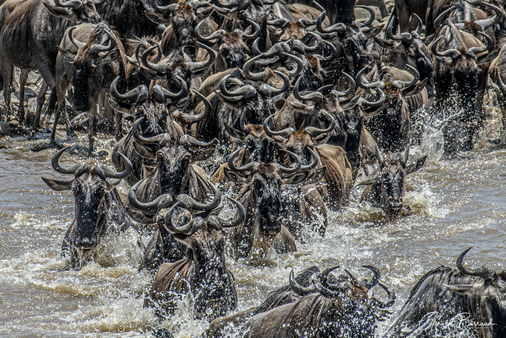 la-gran-migracion-tanzania