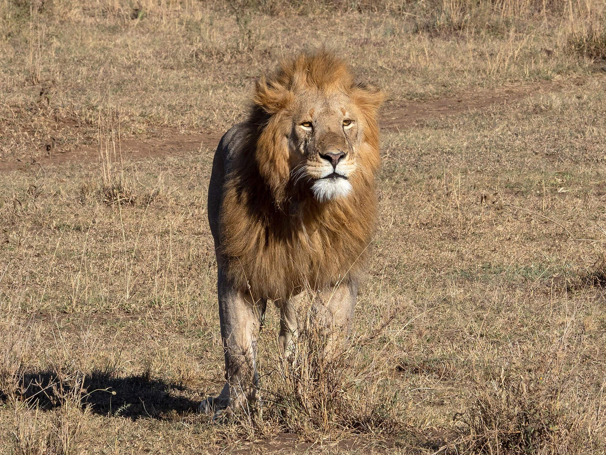 leon serengeti
