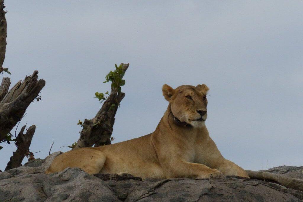 leon-tanzania
