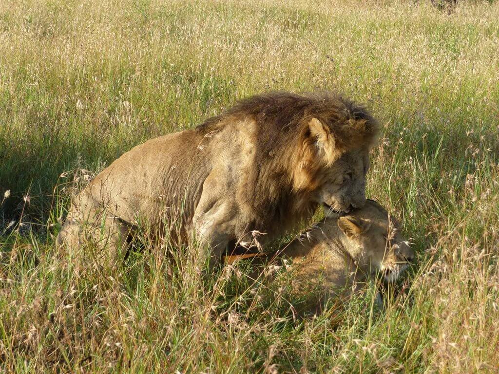 leones Tanzania