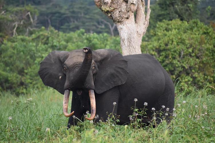 mejores viajes a África