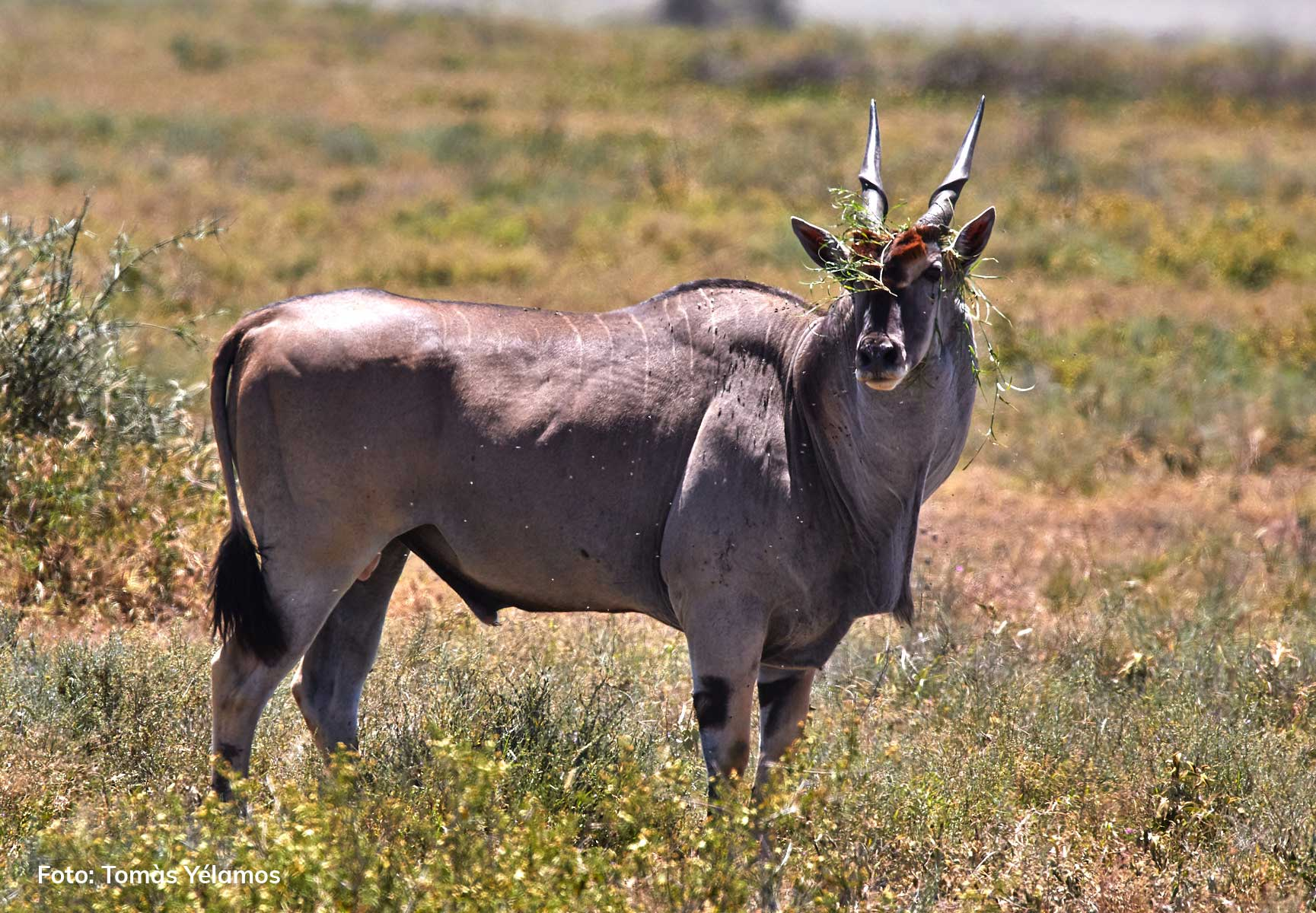 ndutu Tanzania safari