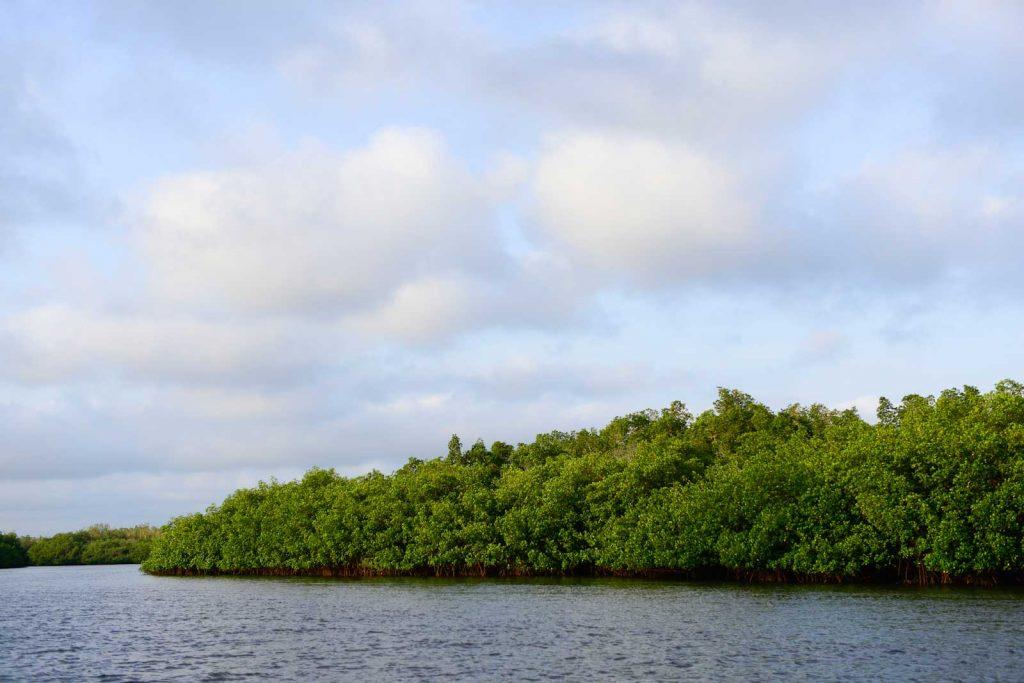 paisaje-guinea-bissau