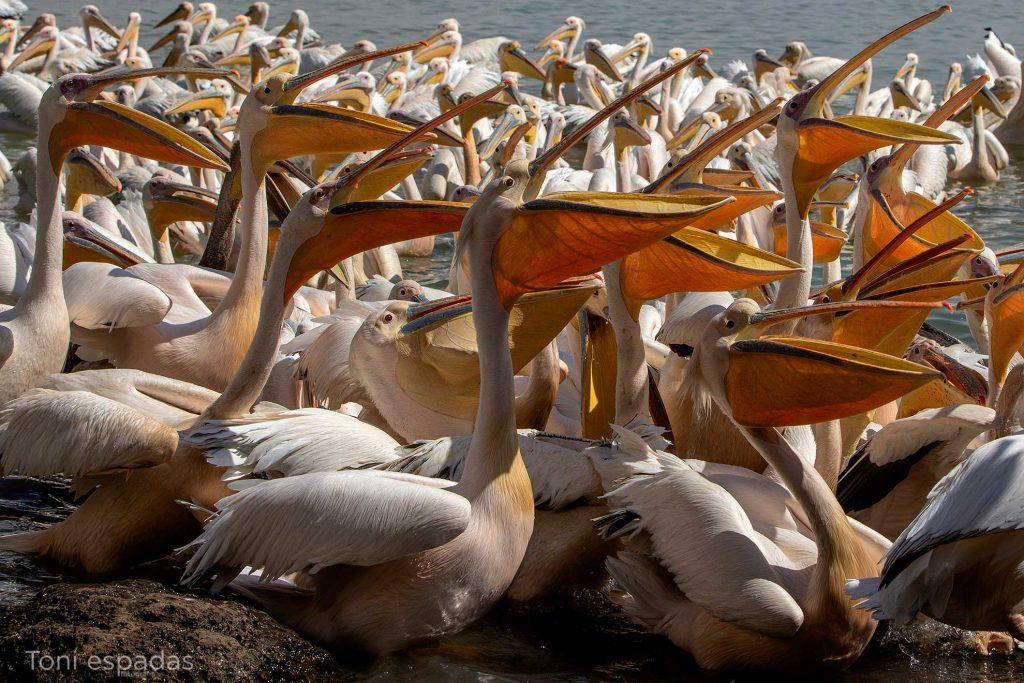 pelicanos-fishmarket-bahardar