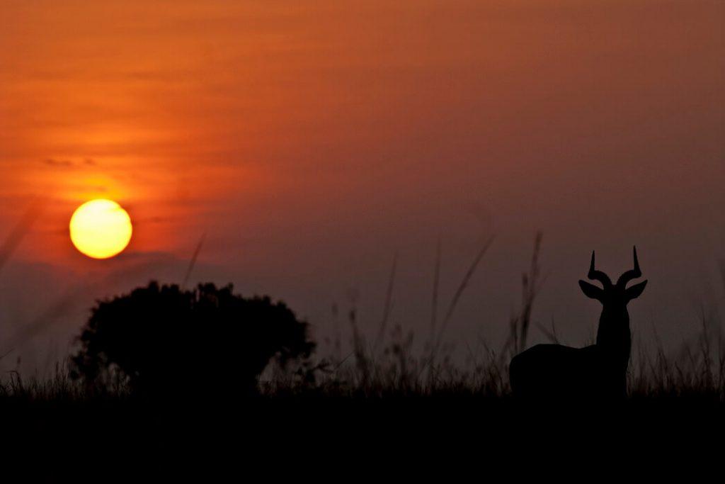 puesta-de-sol-uganda