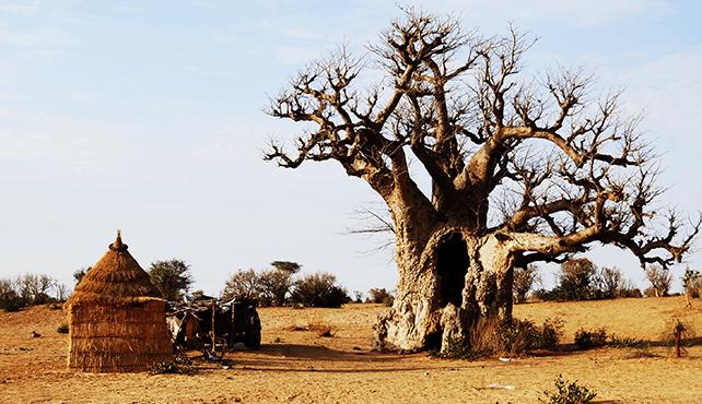 viajar a Senegal