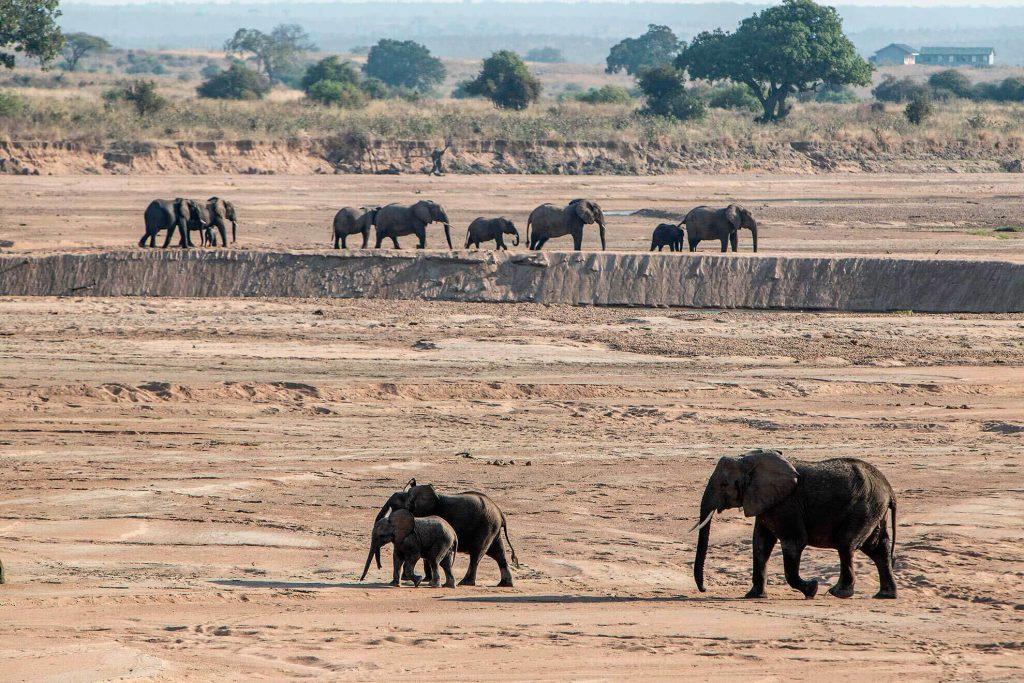 ruaha-elefantes-rio