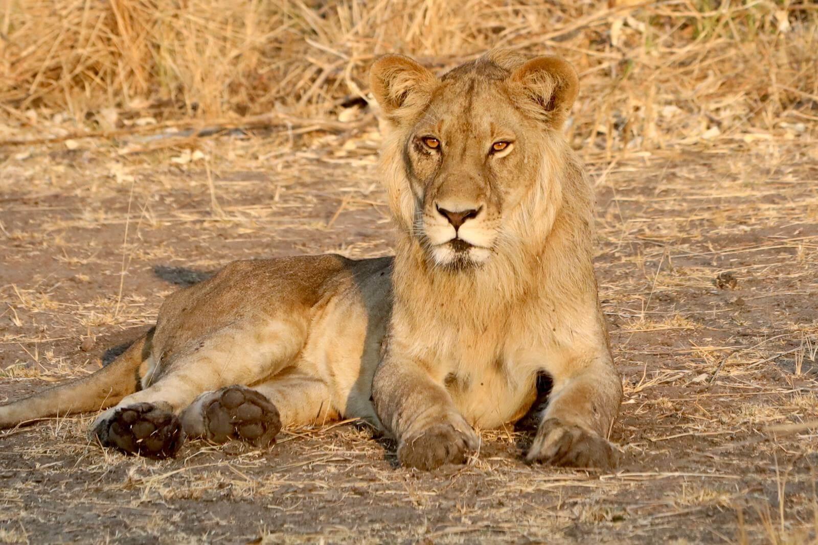 leona en Ruanda
