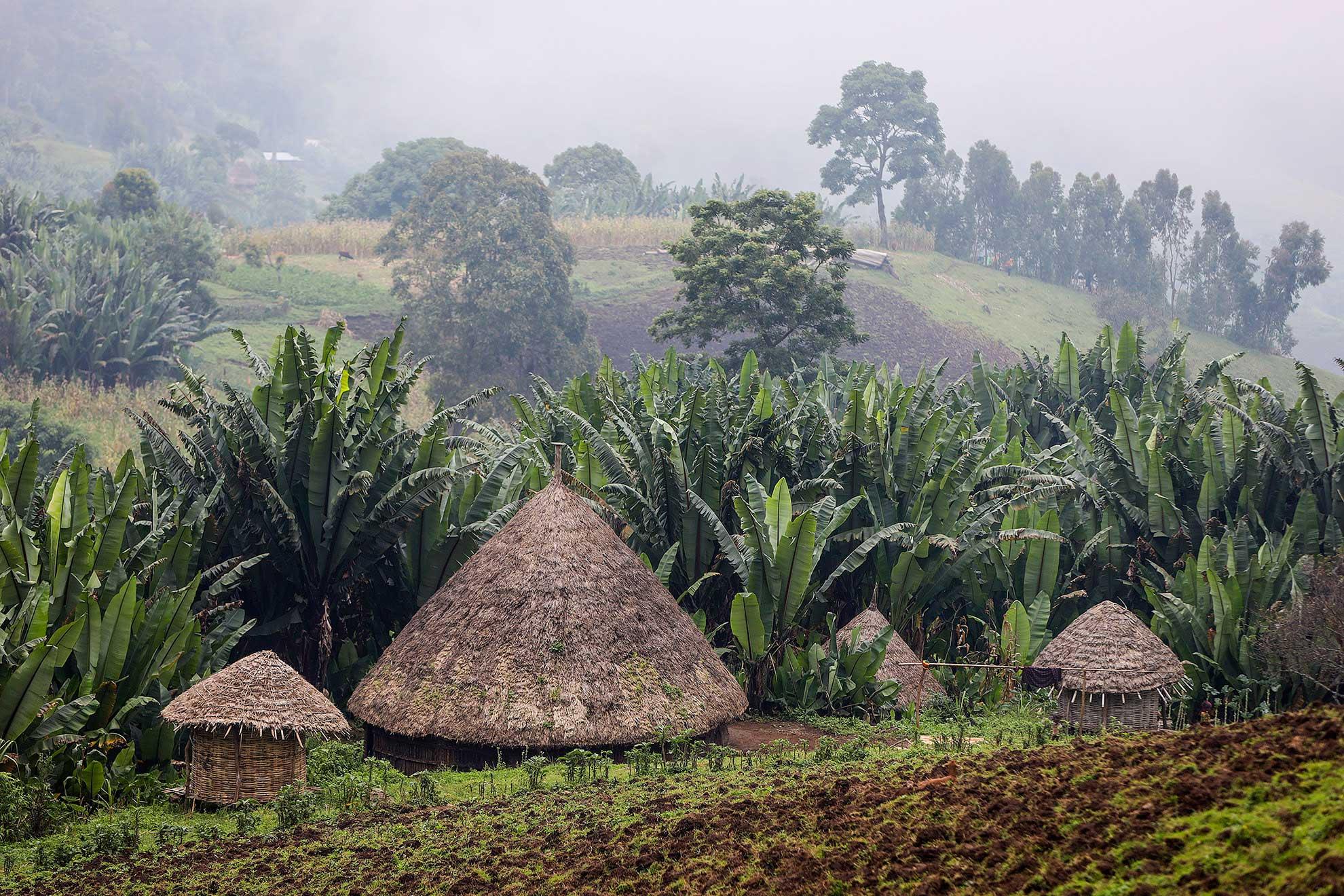ruta del café Etiopía