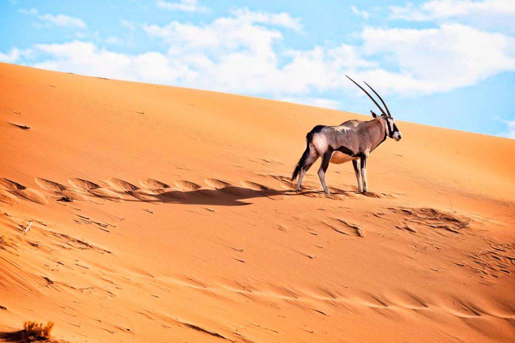 ruta-namibia