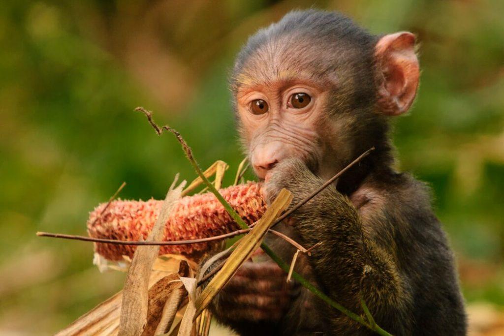 safari-animales-uganda