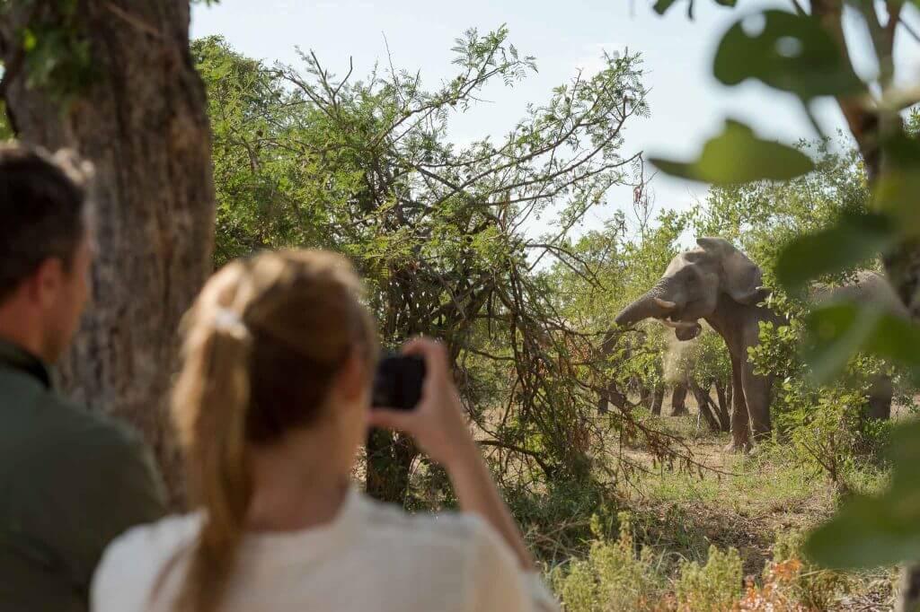 safari fotográfico a pie