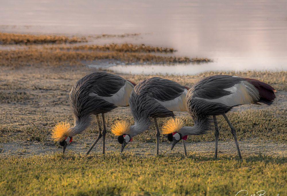 safari-fotografico-tanzania