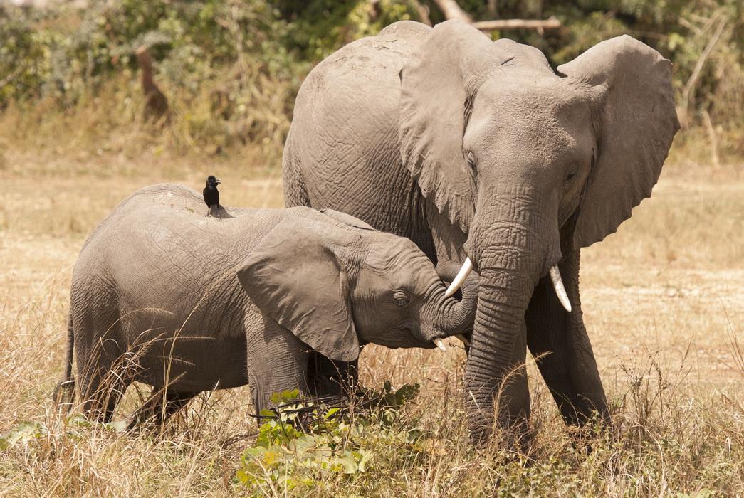 safari fotográfico Uganda