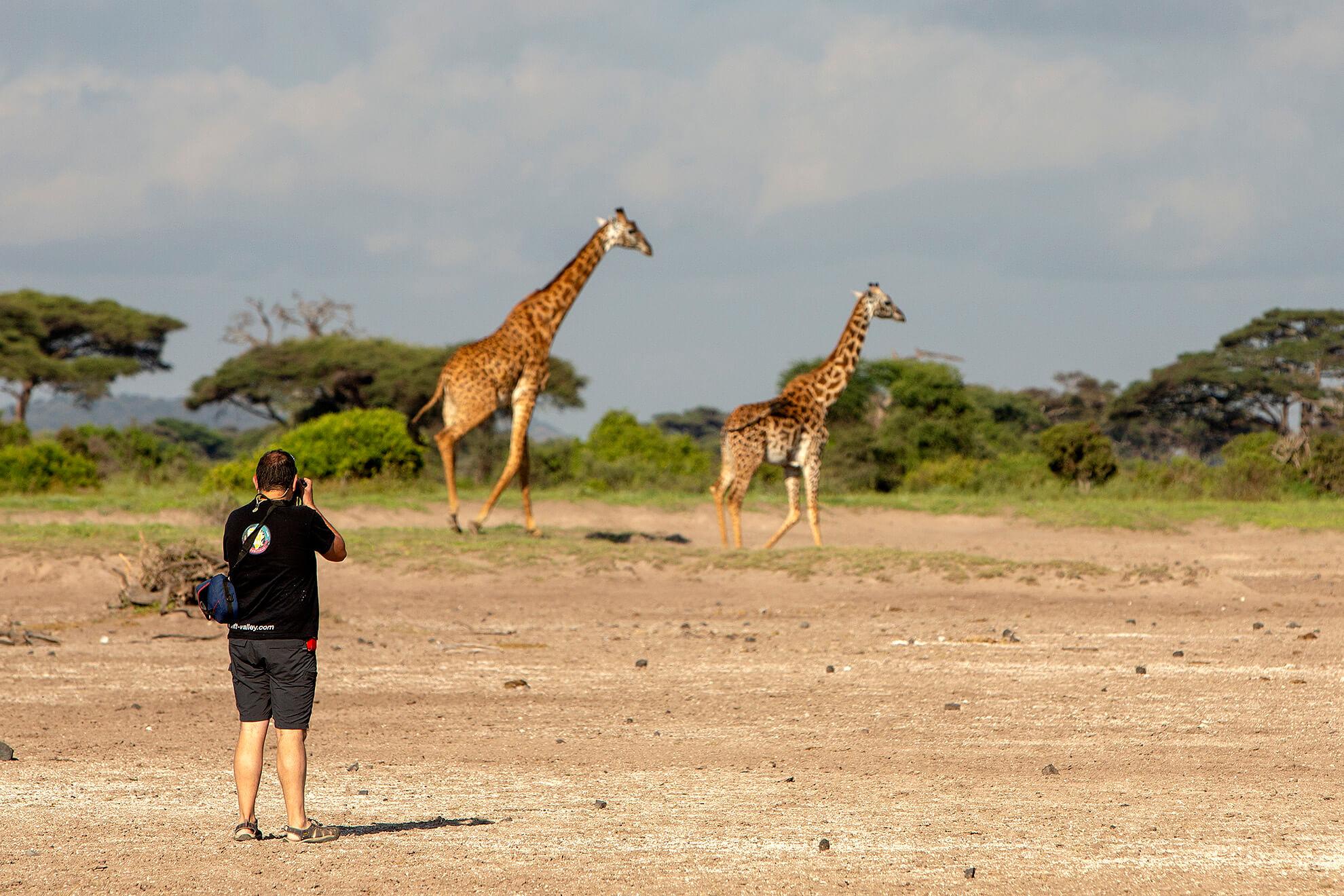safari Tanzania jirafa