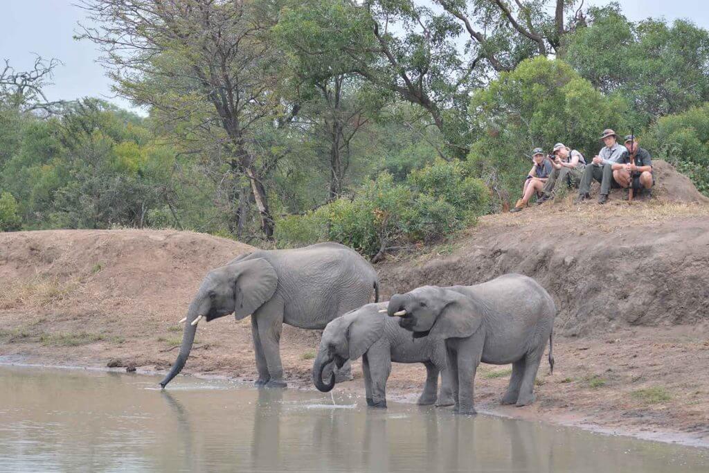 afaris a pie por África ver elefantes