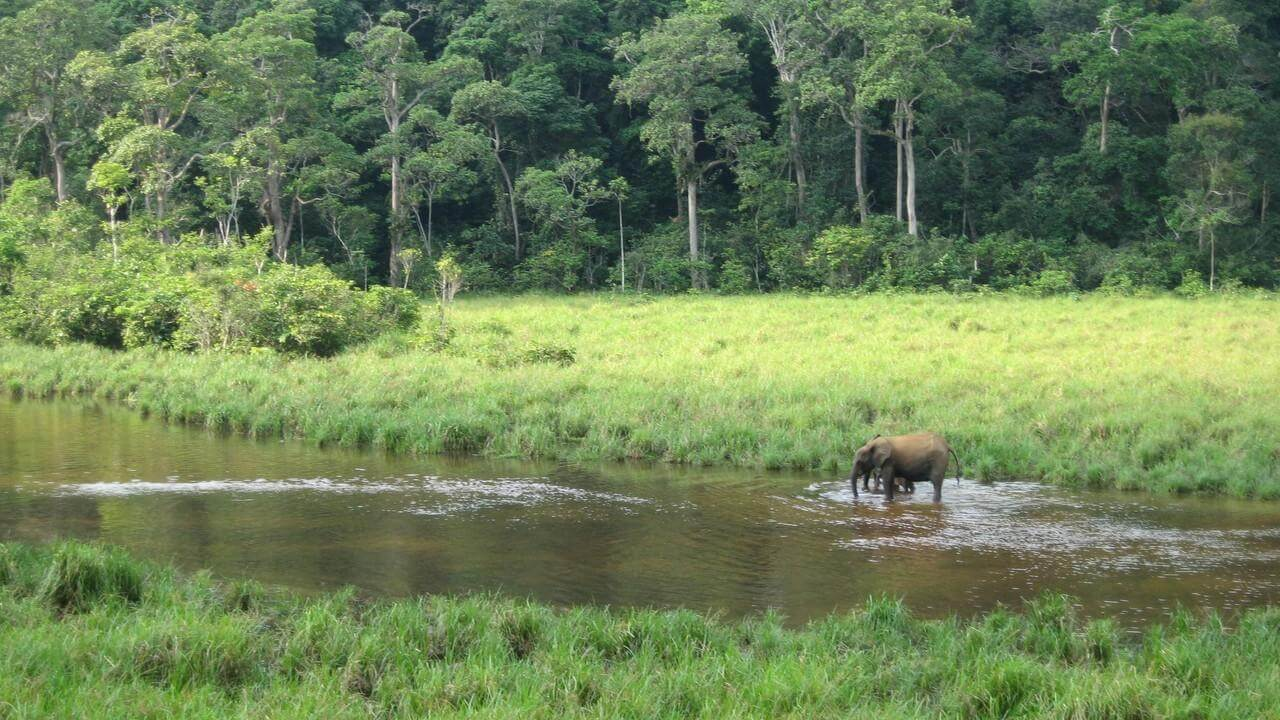 selva de akaka