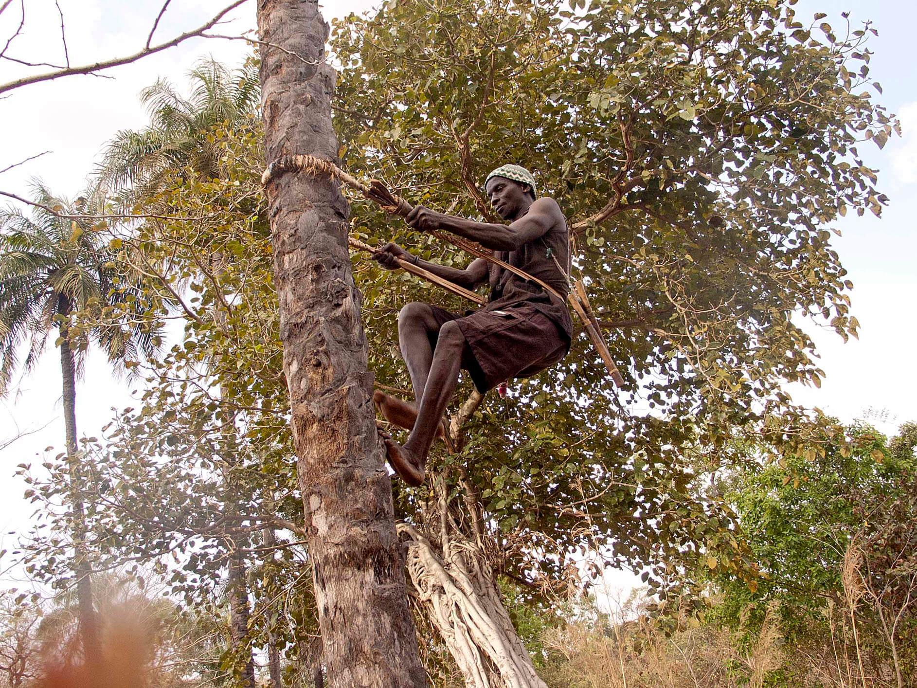 senegal palmero