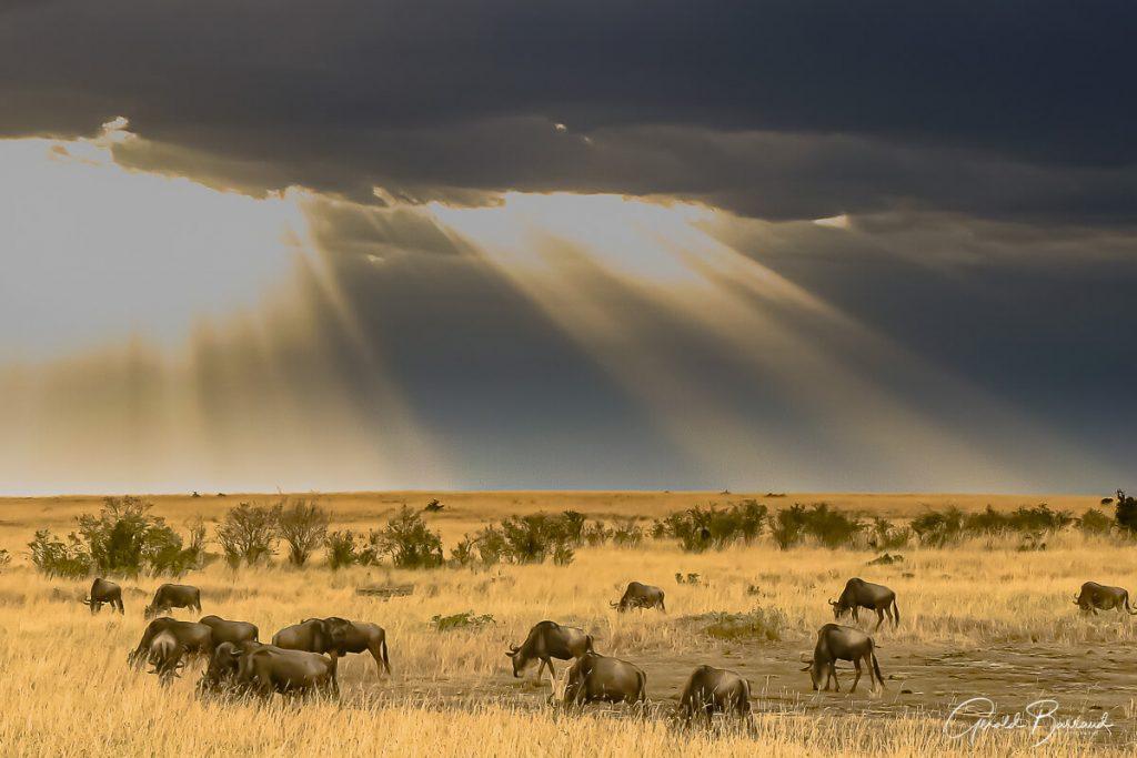 tanzania-fotografico