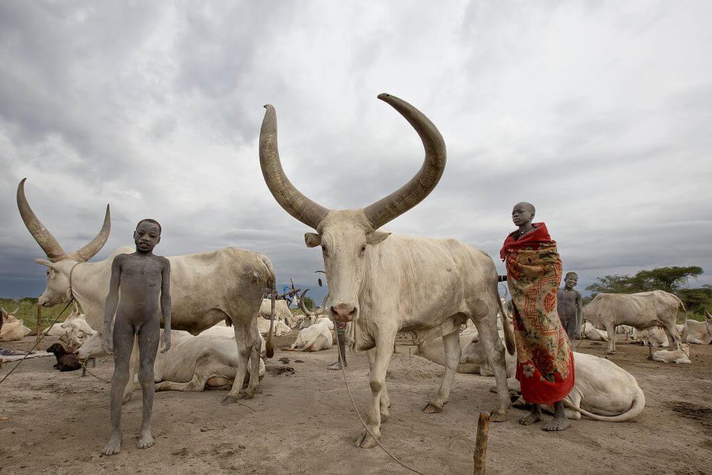 terakeka mundari cattlecamp