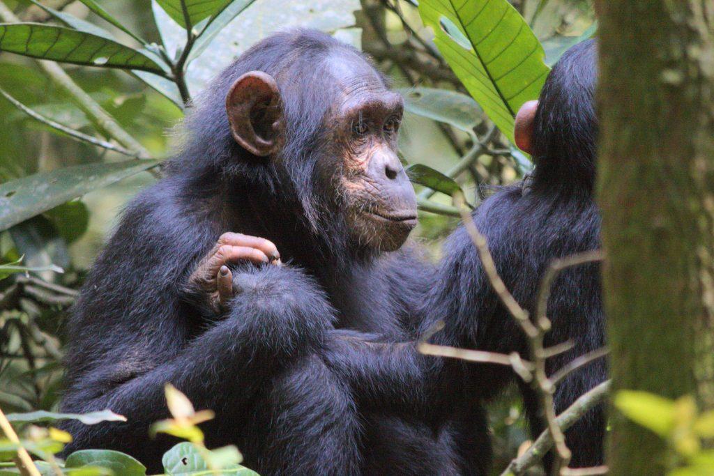 viajar-a-uganda-agosto