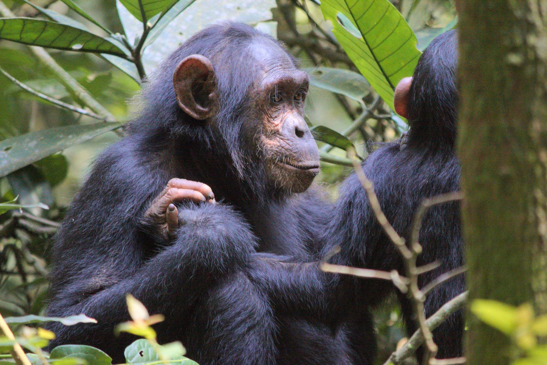 viajar a Uganda agosto
